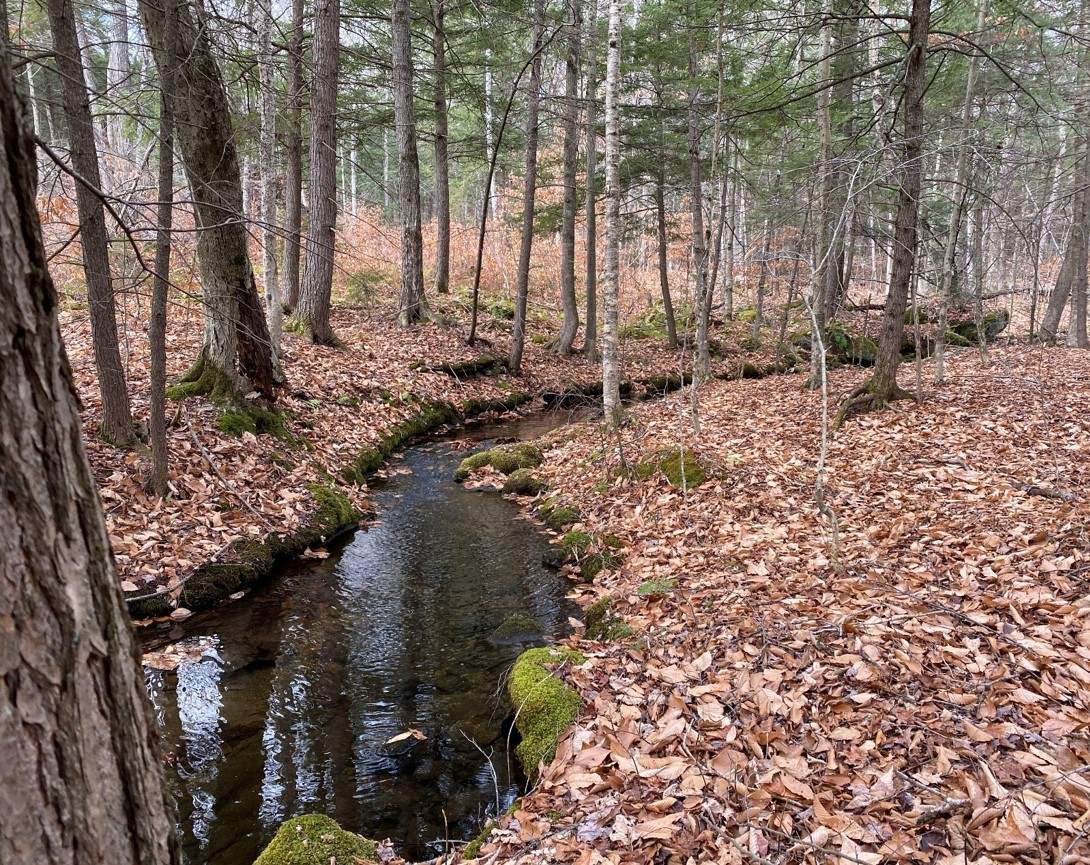 "Ausbon Sargent Accepts Gift of ""Two Brook Woods"" in New London"