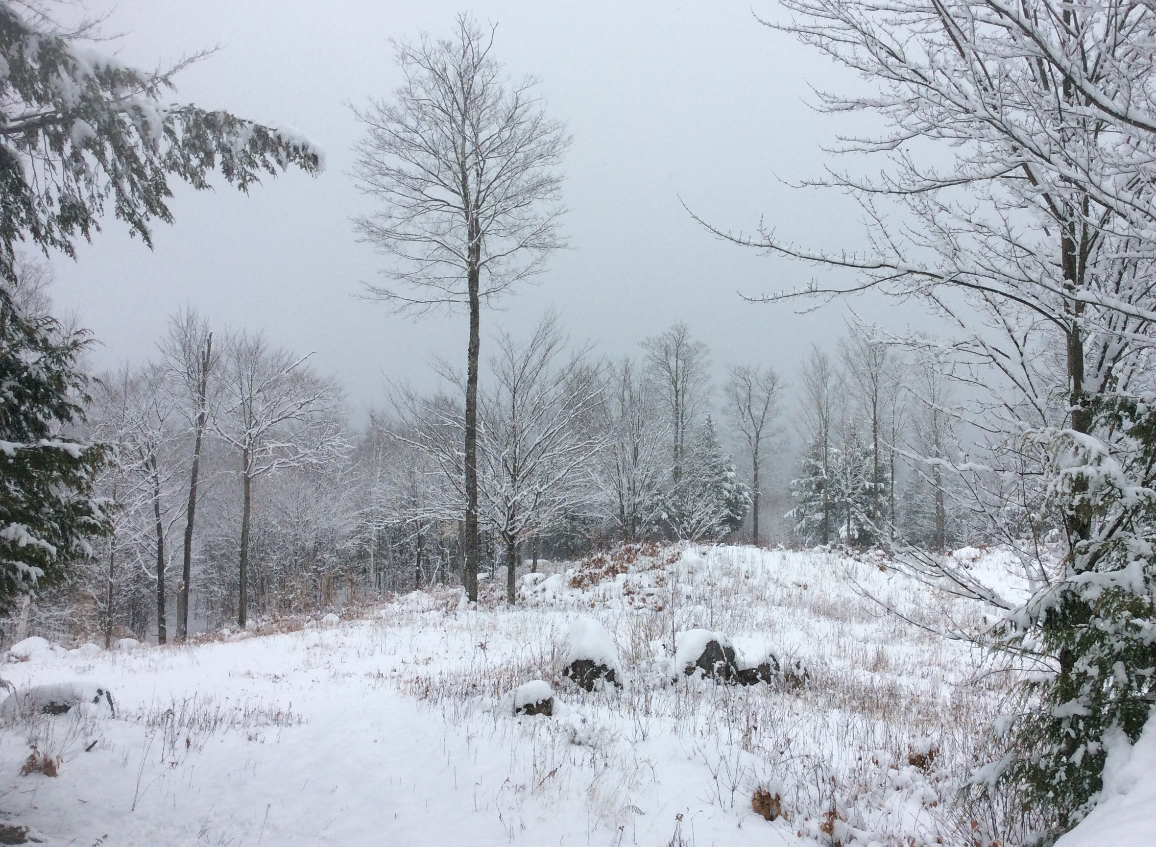 A winter view of the Cassey Brook Preserve
