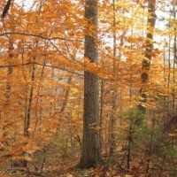 The beauty of the wild, fall forest at Stoney Brook in Newbury.