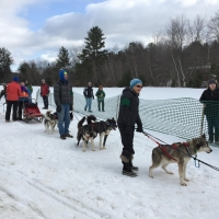 As the riders orgaized their dogs and sleds for the ride.
