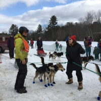 Debbie Stanley assists with some of the dogs.