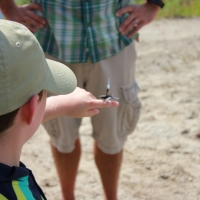 Once Andy has shared some dragonfly facts with the group, it's fascinating to view them up close.