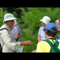 Embedded thumbnail for 2019-A Dragonfly Walk at the Sawyer Brook Headwaters Property