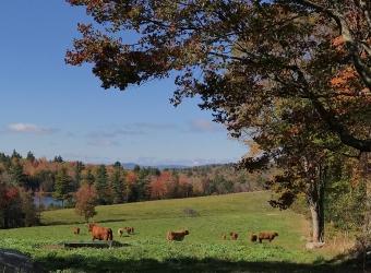 Congratulations to Star Lake Farm on their NH Tree Farm Award