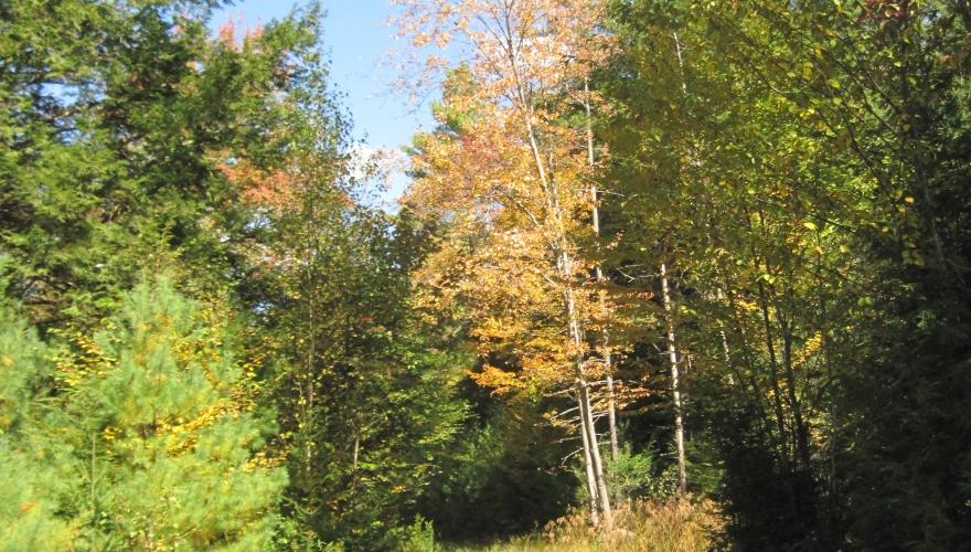 Wendell Marsh North