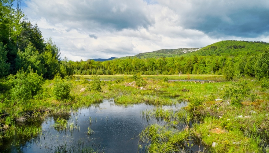 Sawyer Brook Headwaters Property