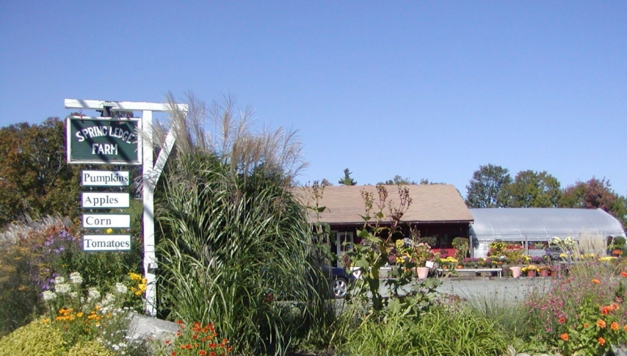 Spring Ledge Farm
