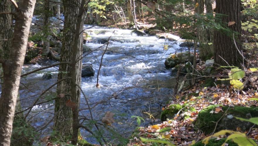 New England Forestry Foundation-Spaulding