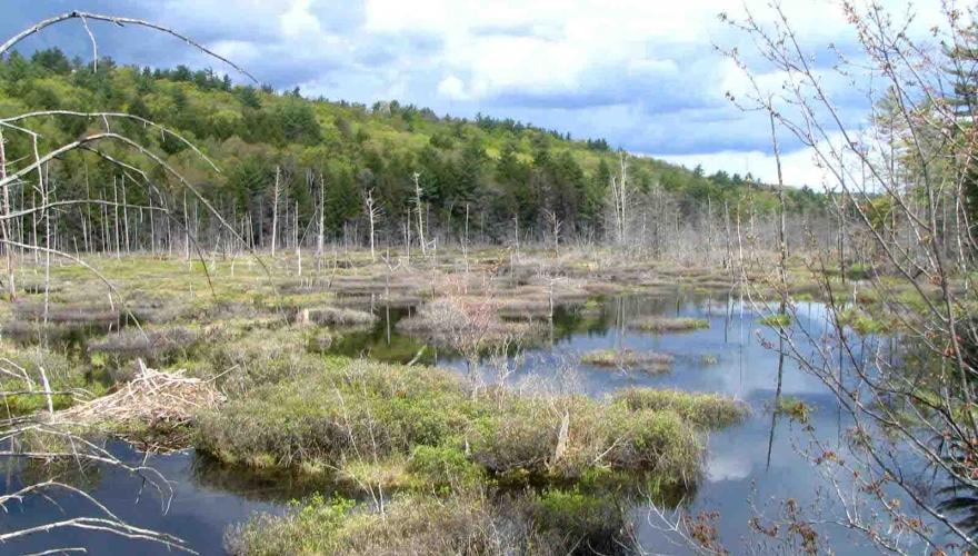 Courser Phase 1(Mud Pond, Warner)