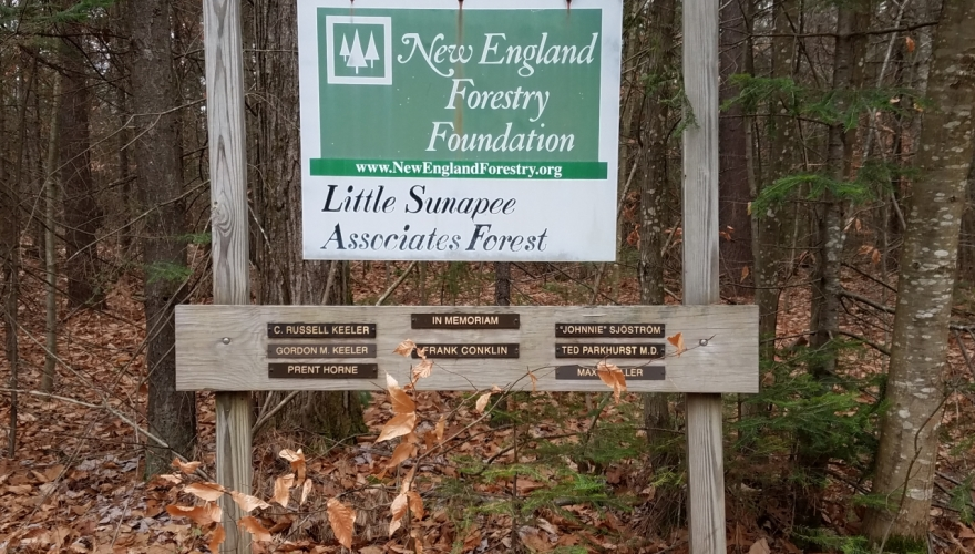 New England Forestry Foundation