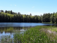 Russell Pond looking toward the O'Neil Conservation Easement.